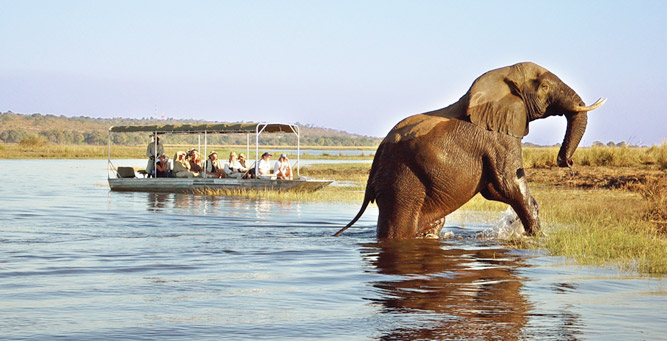 Top 5 Chobe Experiences - game viewing from the river