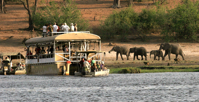 Top 5 Chobe Experiences - river cruises