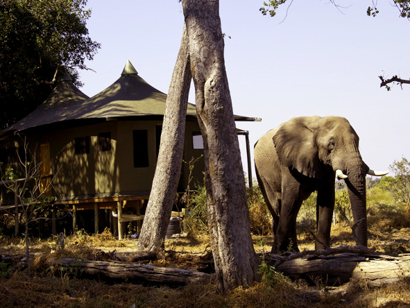 Little Vumbura - Camp-based game viewing