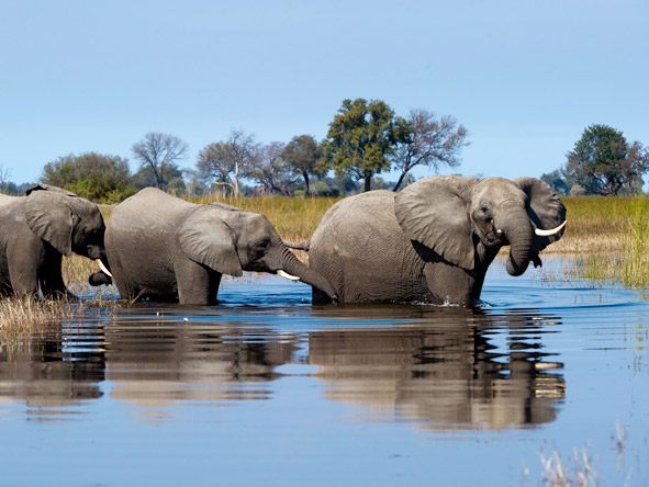Luxurious Vic Falls & Botswana Safari - Elephant encounters