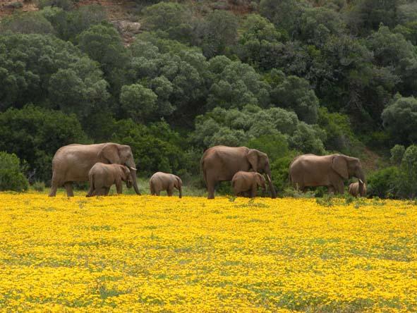 HillsNek Safaris - Big 5 safaris