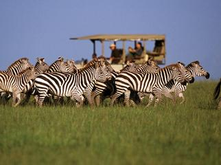 Singita Serengeti House_gallery8
