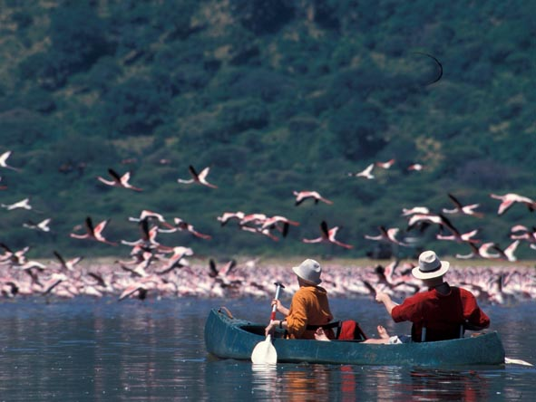 Hatari Lodge - flocks of flamingos