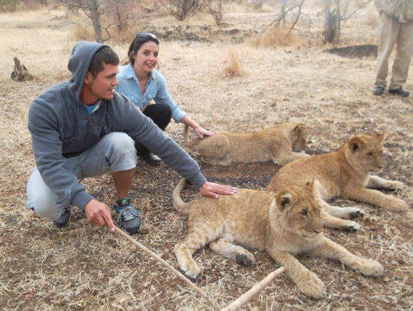 Kelly-Anne Blanchard - meeting with a few 6month old lion cubs on a lion walking experience at Victoria Falls.