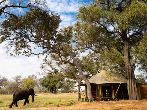 Cape Town, Botswana & Vic Falls Luxury Journey - Up-close game viewing
