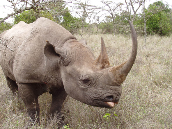 Sweetwaters Tent Camp - Black rhino sanctuary