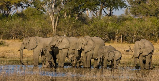 Going Private in Botswana - large elephant herds