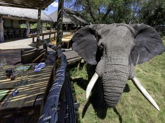 Going Private in Botswana - Mombo Camp