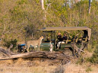 Going Private in Botswana - big cats