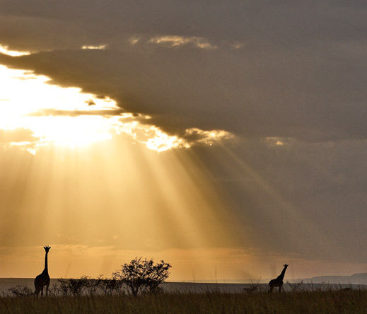 Set in beautiful private conservancies, Porini camps blend exclusive game viewing with stunning scenery.
