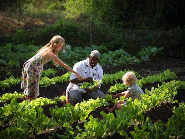 Eco camps often have their own vegetable gardens - salads on safari won't be any fresher!