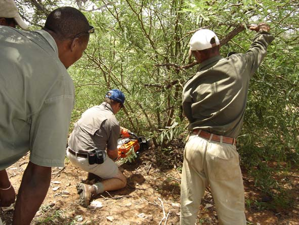 Eradicating alien vegetation is part of the conservation ambit at our recommended eco lodges.
