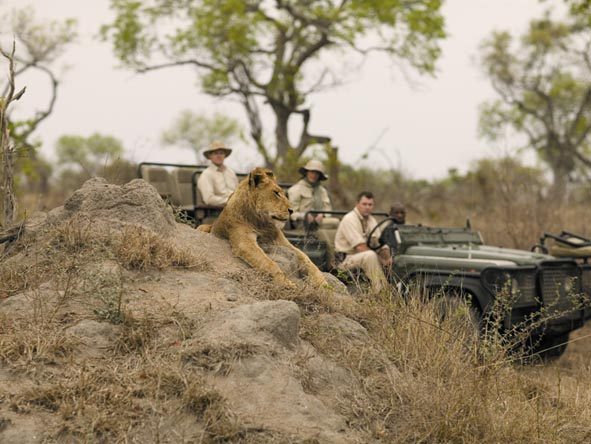 Kruger's private reserves offer superb game viewing & combine easily with Mozambique's dazzling archipelagos.