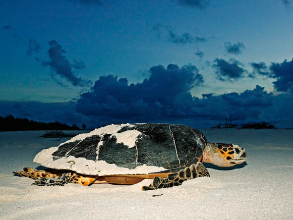 Wildlife viewing doesn't end with your safari: turtle nesting, bird watching & teeming coral reefs await!