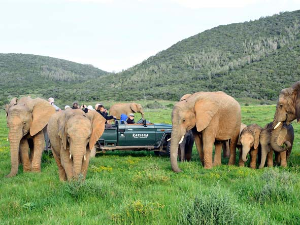 Malaria-free safaris in the Eastern Cape ensure peace of mind for families with young children.