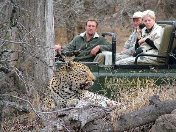 Up-close leopard sightings are a speciality at Kruger's private reserves - ask us which ones are best.