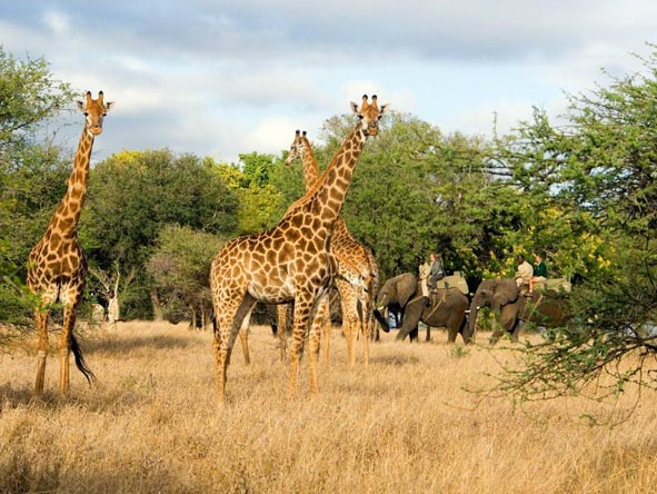 African safari animals - photo#14