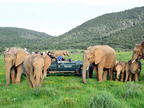South Africa's Eastern Cape lodges offer excellent malaria-free Big 5 safaris with plenty of close-ups!
