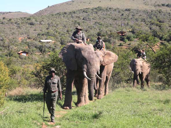 Make an elephant-back adventure part of your South African safari - ask us how.