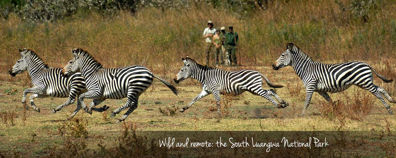 Step into the Wild - South Luangwa Walking Safaris