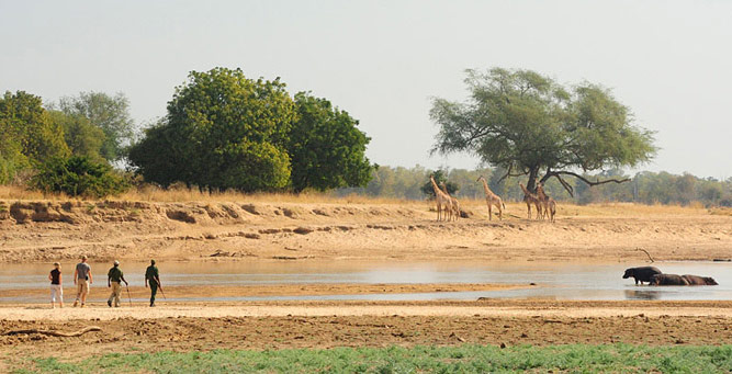 Step into the Wild - the South Luangwa landscape