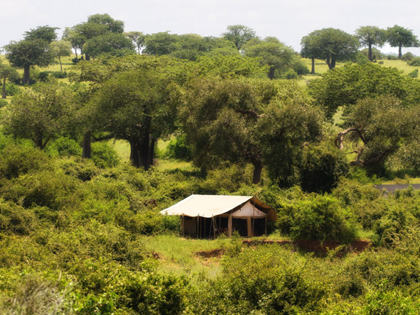 Kigelia Camp - Ruaha National Park