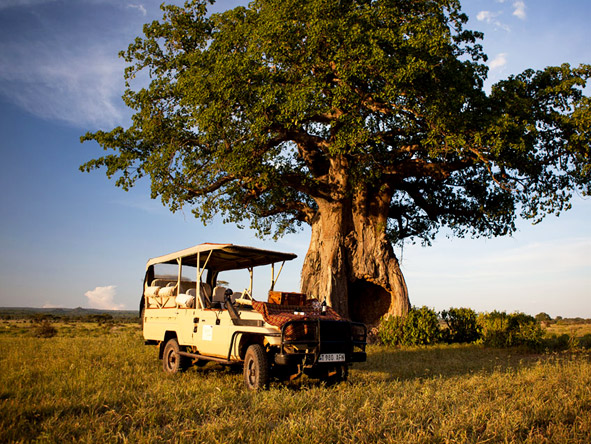 Kigelia Camp - Game drives
