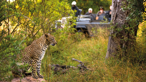 African Tours & Safaris - Big 5 Safaris