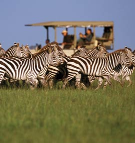 Safari Homes - Top 5 African Safari Villas