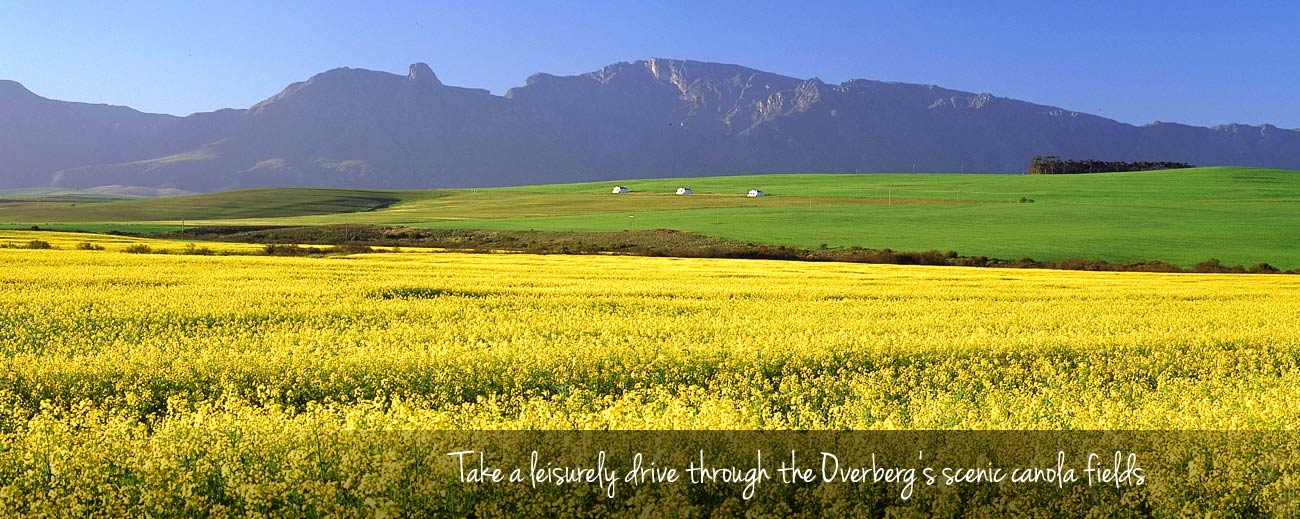 Easy Driver - A South African Family Road Trip