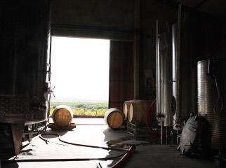 Easy Driver - Wine Cellar