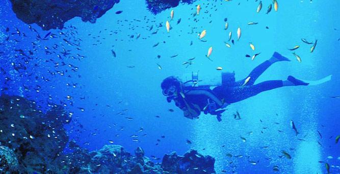 Cape Escape - diving in Cape Town
