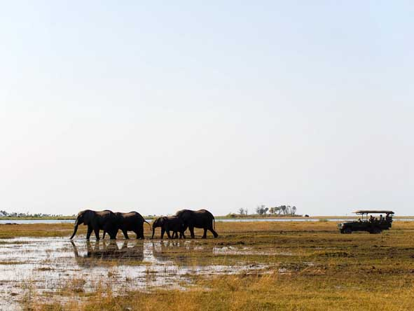 Zarafa Camp - Morning & afternoon game drives