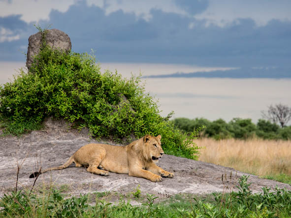 Botswana & Mozambique Idylic Escape - Big cats