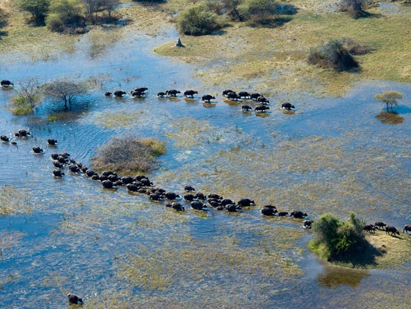 Botswana & Mozambique Idylic Escape - Great herds of buffalo