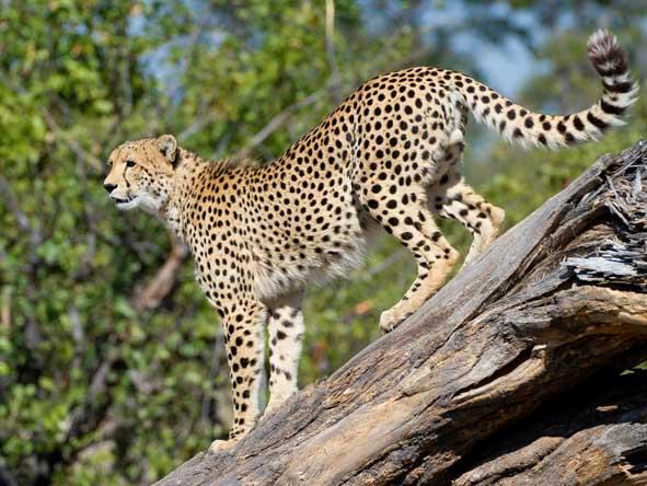 Botswana & Mozambique Idylic Escape - Exceptional safari experience