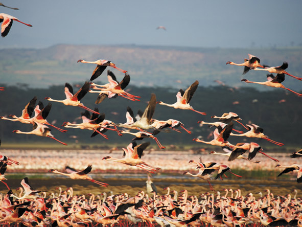 Explore Kenya Private 4x4 Journey - Bird watchers paradise