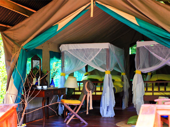Gombe Forest Lodge - Private & personalised experience