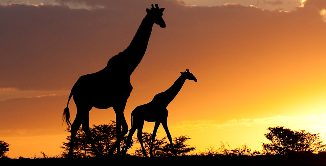 Travel Trends for 2014 - iconic Africa