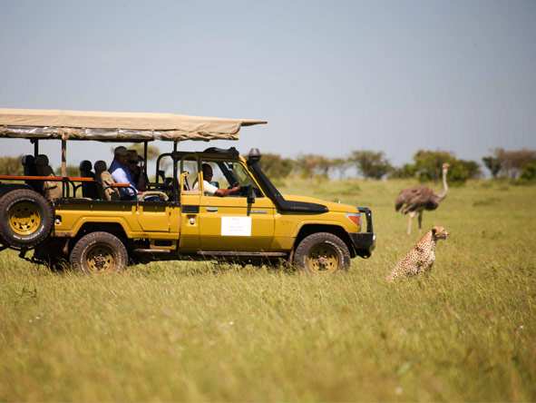 Olare Mara Kempinski - Afternoon game drives