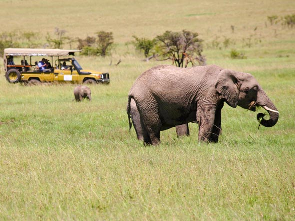 Olare Mara Kempinski - Year round game viewing