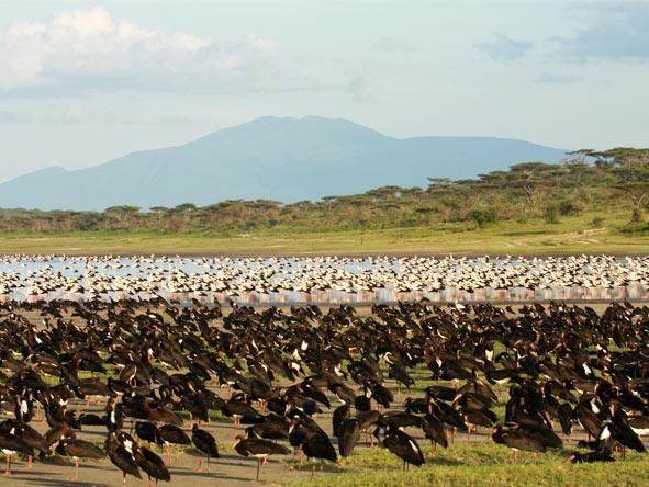 Lemala Ndutu - Bird watchers paradise