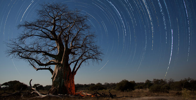 Sunrise & Twilight Photography - baobab