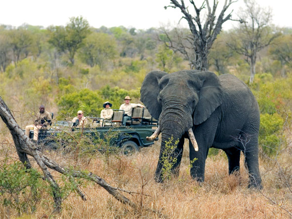 Classic Cape, Kruger & Vic Falls Adventure - Big 5 game viewing