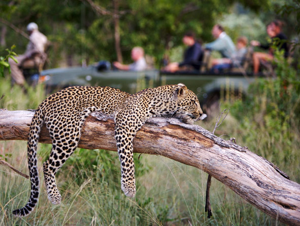 Classic Cape, Kruger & Vic Falls Adventure - Expert, passionate guides