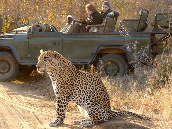Fantastic Cape Town, Sun City & Kruger Holiday - Leopards