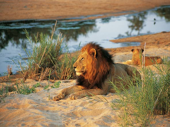 Cape Town, Sun City & Kruger Family Journey - Big cat country