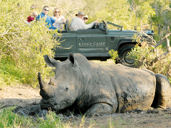 Cape Town, Sun City & Kruger Family Journey - Game drives