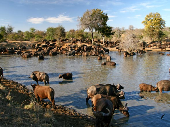 Cape Town, Winelands & Kruger Family Holiday - Game viewing