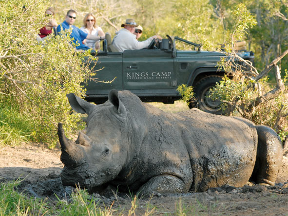 Cape Town & Kruger Family Adventure - Timbavati Game Reserve